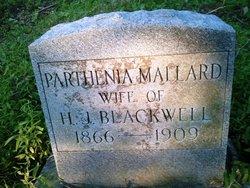 Parthenia <i>Mallard</i> Blackwell