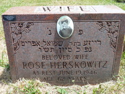 Rose <i>Princer</i> Herskowitz