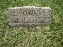Dominic T. Cugini