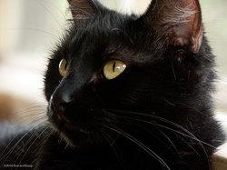 Blackula Prince of Darkness Barros