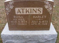 Rosa <i>Gubbleman</i> Atkins