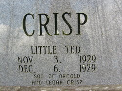 Little Ted Crisp
