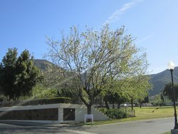 Conejo Mountain Memorial Park