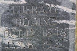 Leurany <i>Colvin</i> Bodine