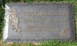 Sheila Joan Whitaker