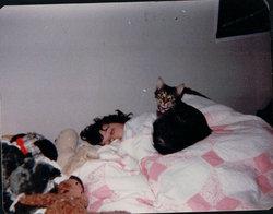 Rose <i>A Tabby Cat</i> Kastelic