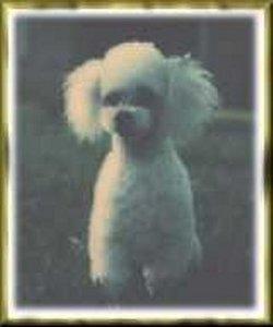 FancyBoy Stallings Fancy Dog