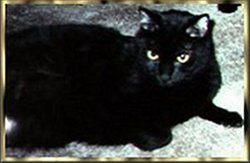 Spook Stallings Bachman Spook'ums Cat