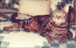 Lucky Jax Stallings Bachman Lucky-Bucky Cat