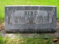 Natalea <i>Hansen</i> Bird