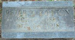 Peter J Cotton