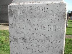 Maria B Ambrose