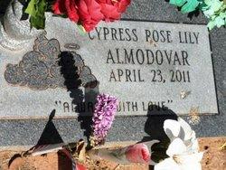 Cypress Rose Lily Almodovar