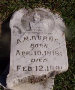 Albert Newton Burns