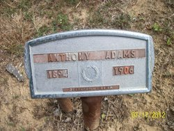 Anthony Adams
