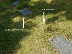 Rosa <i>Daetweiler</i> Musser
