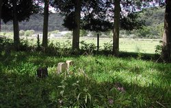 Friends Cemetery - Alexander Farm