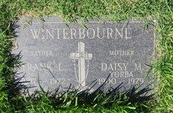 Daisy Margarite <i>Yorba</i> Winterbourne