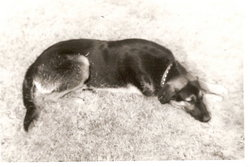 Led Zepland Bryant Zep Dog