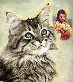 Khalo Cat