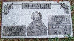Andrew Accardi