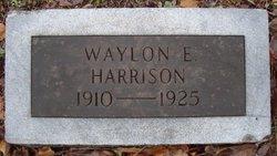 Waylon Harrison