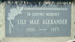 Lily Mae Alexander