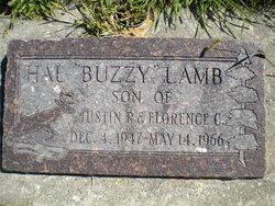 Hal Buzzy Lamb