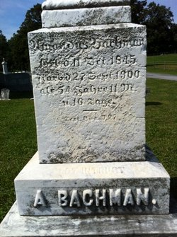Amandus Bachman