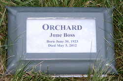 June <i>Boss</i> Orchard