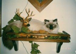 My Sadie Cat