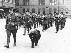 Sgt Gander Dog