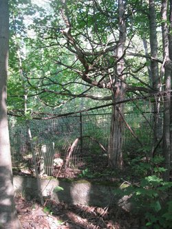 Burley Family Cemetery