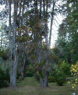 Humptulips Cemetery