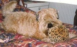 Seamus Dog