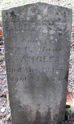 Albert B Angle