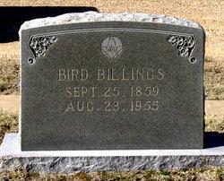 Bird Billings