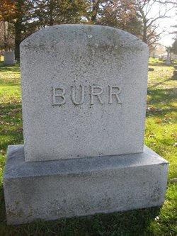 Sula <i>Sheffer</i> Burr