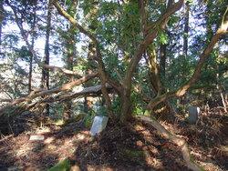 Ocosta Cemetery