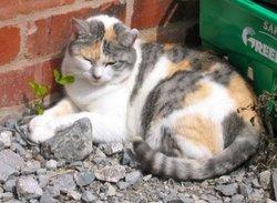 Fenella The Cat
