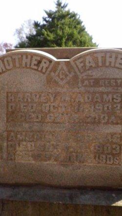 Harvey M Tipp Adams