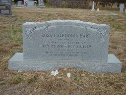 Rosa Caledonia Hart