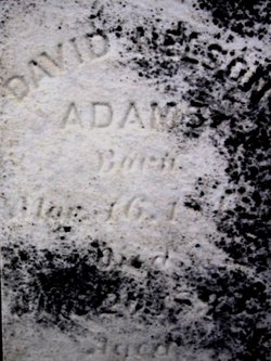 David N. Adams