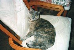 Jessie The Cat Jessie Girl Nibbe