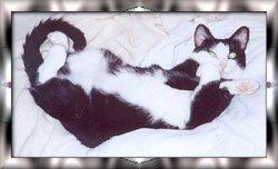 Breeze Bachman Breeze Cat Cat