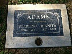 Starling Adams