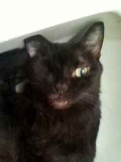 Isabella Bella Cat