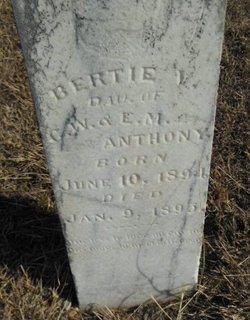 Bertie V Anthony