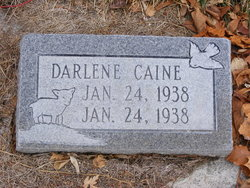Darlene Caine