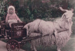 Marie Constance <i>De Lille</i> Burke